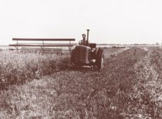 Раздельная уборка семенников многолетнего люпина, 1950-е годы