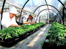 Вегетационный опыт по определению эффективности торфогрунтов на органорастительной основе