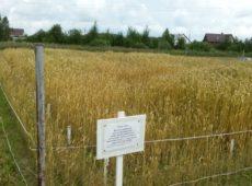 Длительный полевой опыт по изучению агроэкологической эффективности ОСВ