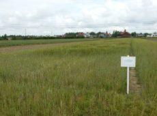 Длительный полевой опыт по использованию соломы